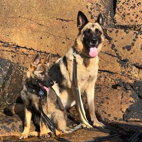 Chiots et chiens