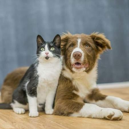Friandises chien et chat