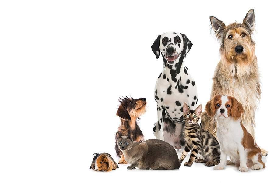 Alimentation et accessoires pour animaux
